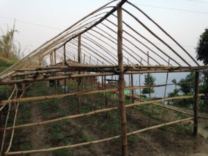 paudel02-dev-prasad-and-tara-prasads-new-greenhouses-2